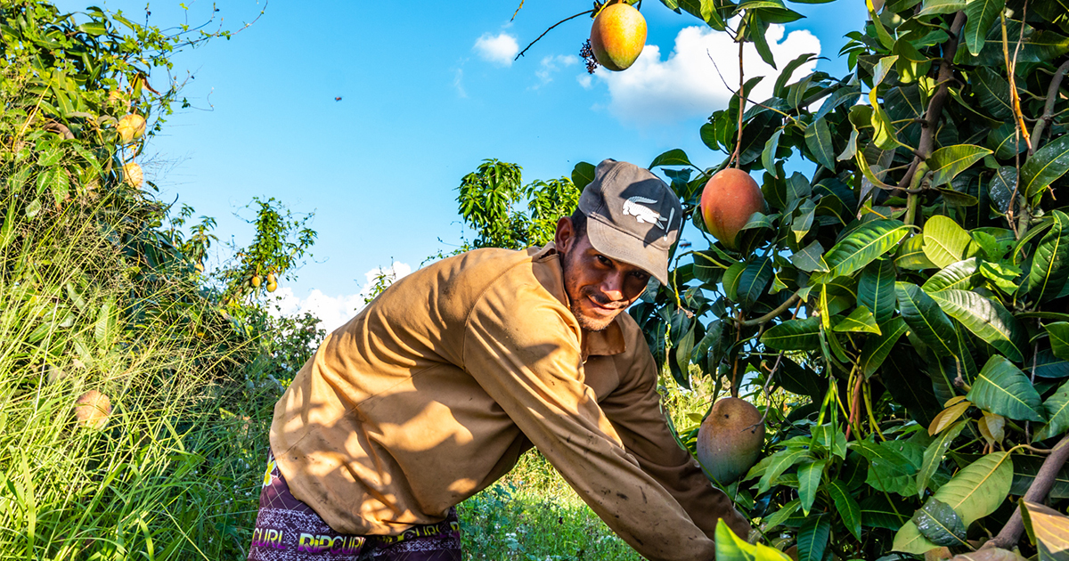"Blue Skies to bring ""fresh from harvest"" fruit to UAE F&B industry"