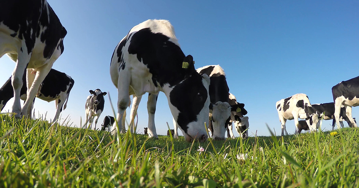 Bord Bia sees record Irish dairy exports to UAE in 2019